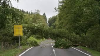 Umgestürzte Bäume auf Autobahn-Zubringer T5