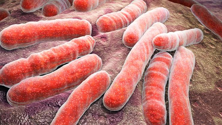 Mycobacterium tuberculosis, der Auslöser der meisten Tuberkulose-Fälle. Forscher der Uni Zürich haben Vorarbeiten für ein Medikament abgeschlossen, welches die immer häufiger gegen Antibiotika resistenten Bazillen verhungern lässt, indem es die Eisenzufuhr kappt. (Pressebild)