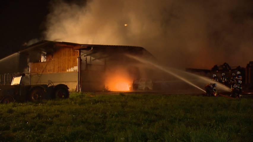 Zwei Kälber sterben bei Stallbrand in Trachslau (SZ)
