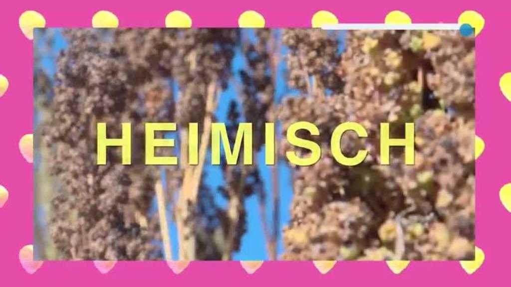 Heimisch Exotisch: Muscheln