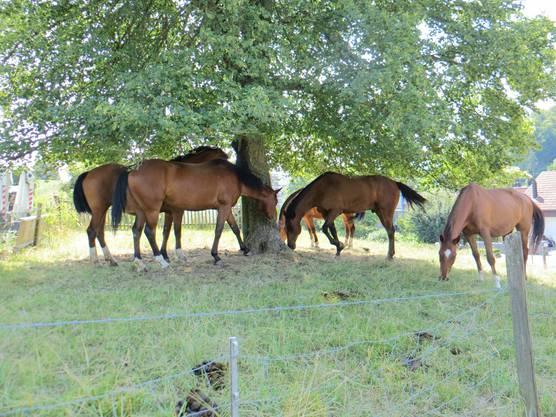 Am Heimweg noch die Pferde