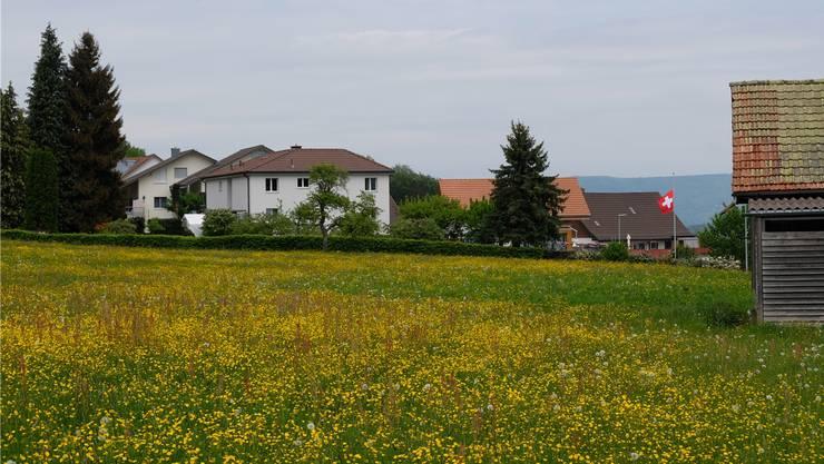 Die Hintermatt an der Schönenbergstrasse im Bergdietiker Ortsteil Kindhausen.