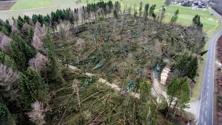 Das Waldstück bei Kestenholz wurde im Januar 2018 durch den Sturm «Burglind» arg in Mitleidenschaft gezogen.