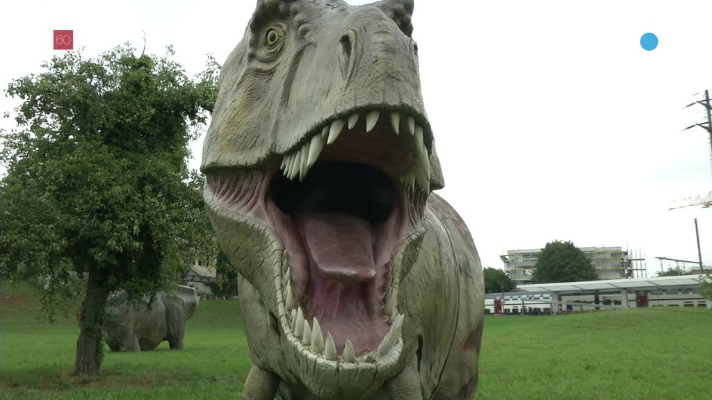 60 Dinosaurier belagern Rapperswil-Jona