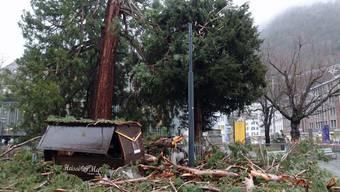 Das hätte ins Auge gehen können: In Chur stürzte eine riesige Baumkrone auf ein Marronihäuschen.
