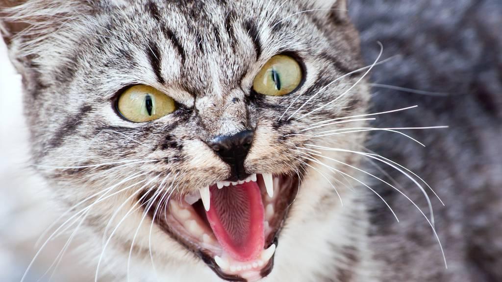 Rätsel um bissige Katze – jetzt muss die Hundestaffel ran