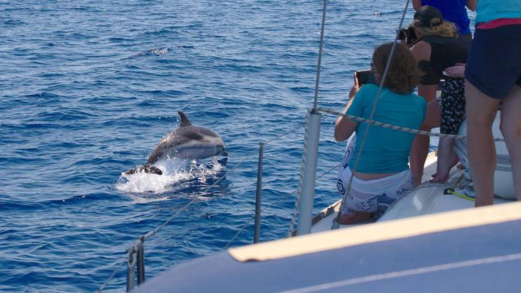 Besuch ist da! Nach mehreren Stunden Beobachten taucht eine Gruppe von Streifendelfinen auf und begleitet das Forschungsboot vor der Ostküste Siziliens.