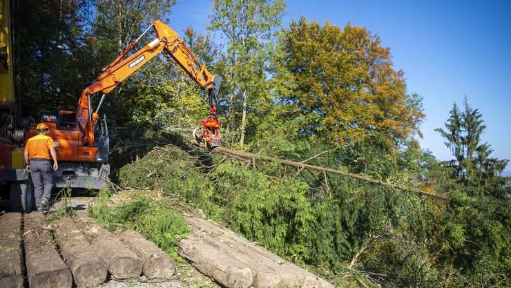 Letzmals wurde im Denzler-Gebiet 1978 geholzt. Ein Eingriffsturnus von 30 Jahren sei üblich, sagt die Baudirektion.