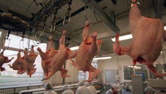 Verarbeiten in Hühnerzuchtfabrik (Archiv)