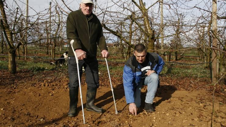 Alfred und Daniel Loosli sind in ihrer Kirschenplantage fündig geworden.