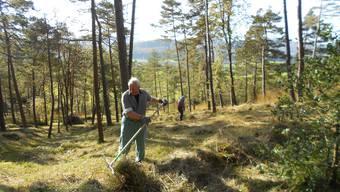 In Bözen wird der Wald gepflegt