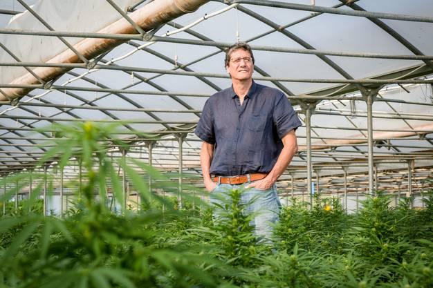 Der Chef der Cannapharm AG, Markus Lüdi, in einem Gewächshaus im freiburgischen Bösingen. Hier lässt die Firma lässt den Hanf für ihre Extrakte von Bauer Käser anpflanzen. Die Extrakte werden dann für Medizinalcannabis verwendet.