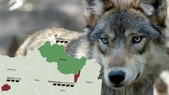 Der Wolf kommt dem Zurzibiet immer näher.