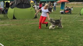 «Swiss Dog Show» 2017 in Aarau