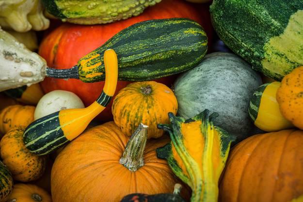 Kürbis-Liebhaber können im Zelt in Wildegg über 60 verschiedene Kürbissorten kaufen