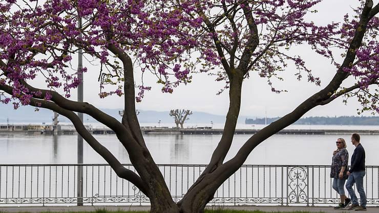 Fast menschenleere Seepromenade in Genf. (Symbolbild)
