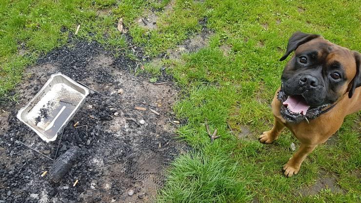 Hund Monty kennt den Anblick: Gebrauchte Einweggrills, zerstörte Rasenflächen. Alltag in den Langen Erlen. Und das wird voraussichtlich auch so bleiben.