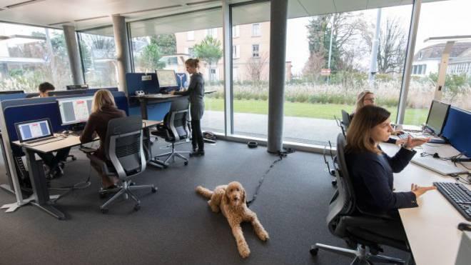 Neu hergerichtete Büroetage: Am Hauptsitz von Nestlé Schweiz in Vevey dürfen die Mitarbeitenden ihren Bello oderRex zur Arbeit mitnehmen. Foto: Karl-Heinz Hug