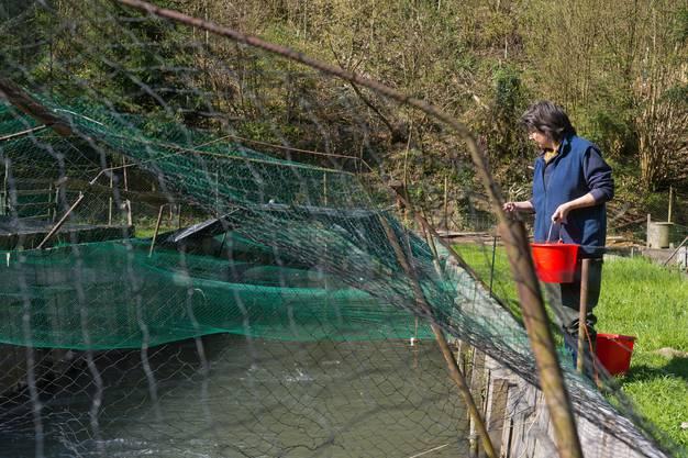Susanne Flückiger füttert ihre Fische