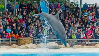 Am 20. Oktober hüpfen die Delfine im Connyland ein letztes Mal