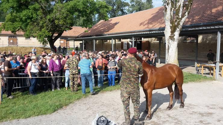 Pferde-Auktion (2)