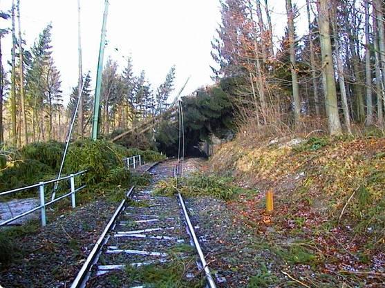 Mehrere umgestützte Bäume versperrten die Zufahrten zum Berg - auch das SZU-Trassee war betroffen