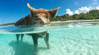 Reisereportage Bahamas