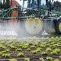 Seit den 1970er Jahren war Chlorothalonil zugelassen. Bauern versprühten es, um Gemüse oder Getreide vor Pilzkrankheiten zu schützen.
