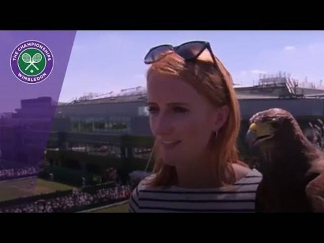 Wimbledon 2017 - Rufus