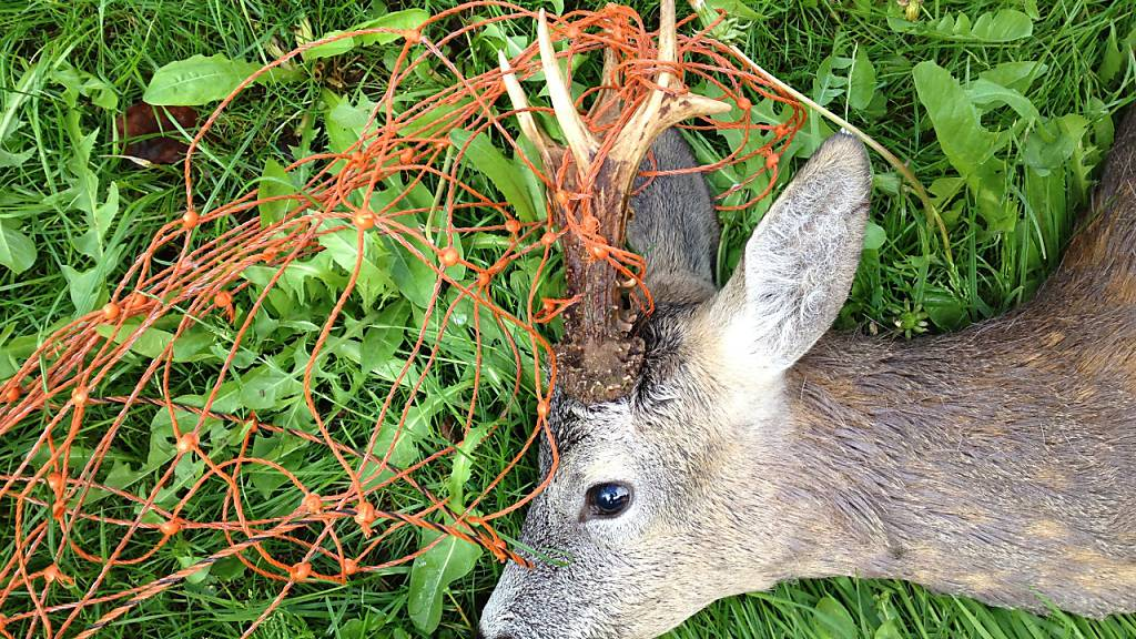 «Stopp dem Tierleid» - Initianten kritisieren Kommission