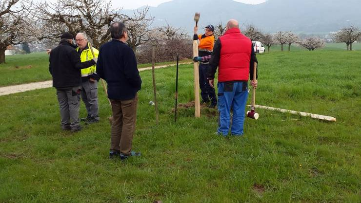 Insgesamt wurden 40 neue Niederstamm Bäume angepflanzt.