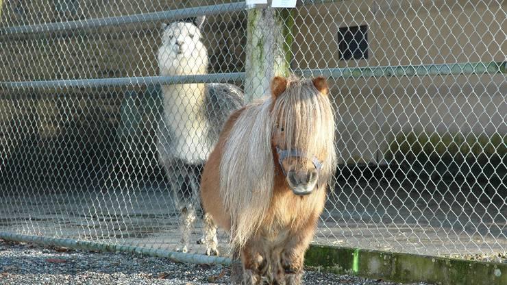 Im Zoo Hasel können in Remigen Lamas, Pferde, Affen und viele weitere Tiere bestaunt werden.