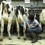 Milchbauern-Vertreter stellen Forderungen für einen fairen Markt. (Symbolbild)