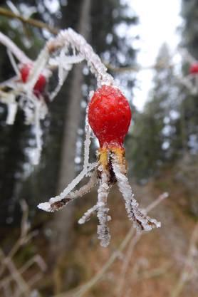 Im Winterkleid, Ibergeregg