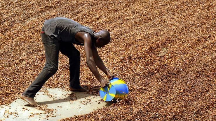 Kakaobauer in der Elfenbeinküste: Mit einer besseren Ausbildung wäre eine Produktivitätssteigerung möglich. Keystone