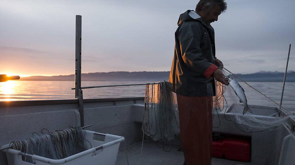 Ein Fischer am Bodensee: Im Netz finden sich immer weniger Fische.