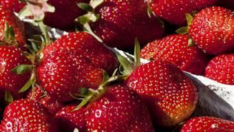 Die Erdbeersaison ist eröffnet (Archiv)