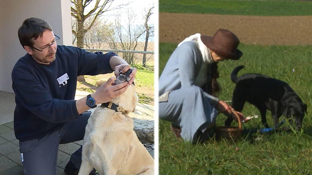 Traumberuf Tierpfleger? / Naturheilmittel für Vierbeiner