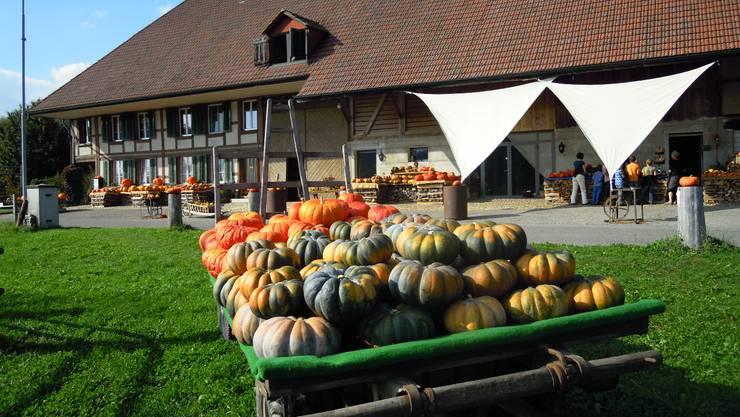 Farbenprächtig und einladend wirkt der Kürbishof der Familie Weyeneth in Lüterkofen.