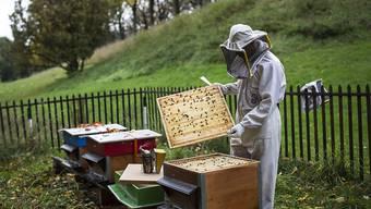 In diesem Jahr ist eine der schlechtesten Honigernten der letzten Jahre überhaupt erzielt worden. (Archivbild)
