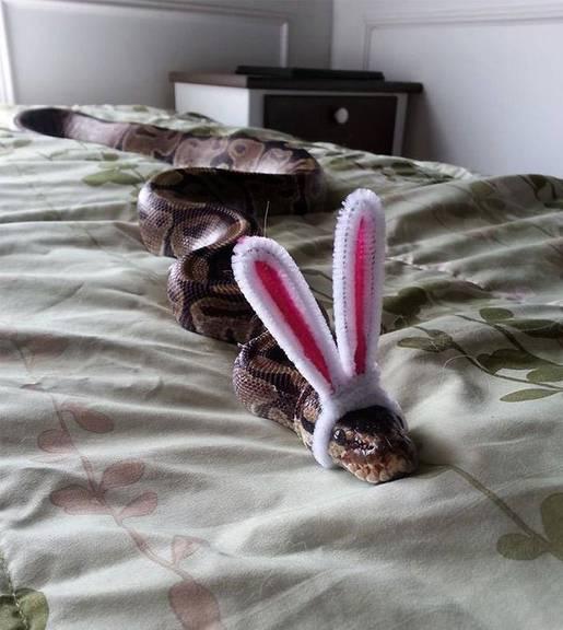 snakesinhats.tumblr.com