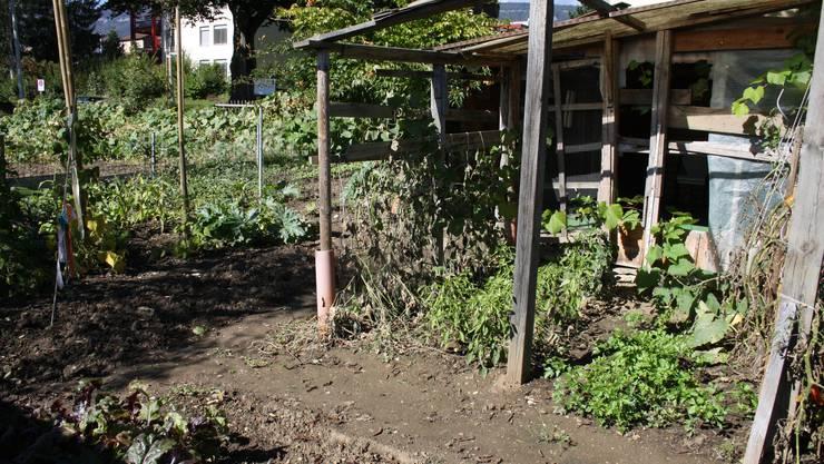 In der Gartenparzelle wird allerlei Gemüse angepflanzt