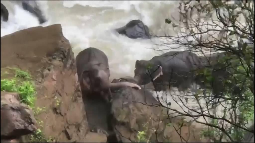 Elefantengruppe will Junges retten und ertrinkt