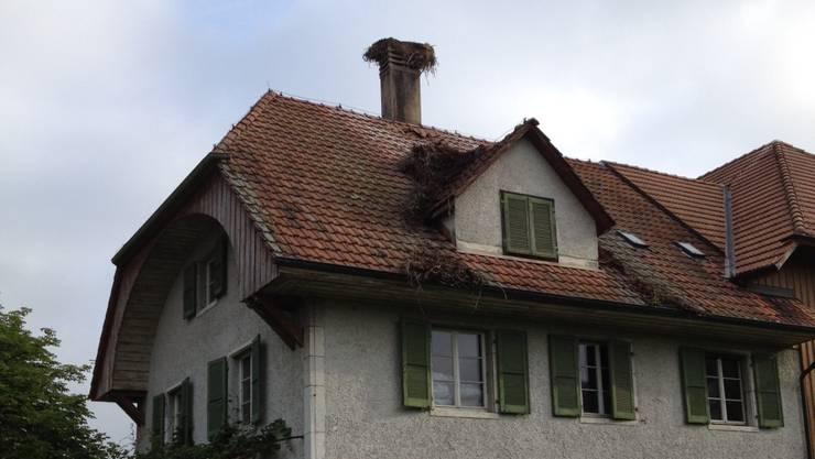 Das Storchennest stürzte in der Nacht auf Mittwoch ab. Zwei Störche starben.