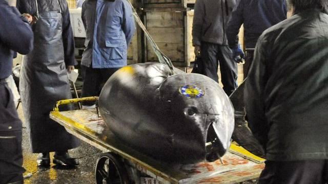 Dieser gigantische Thunfisch ist 32,5 Millionen Yen (373'000 Franken) wert