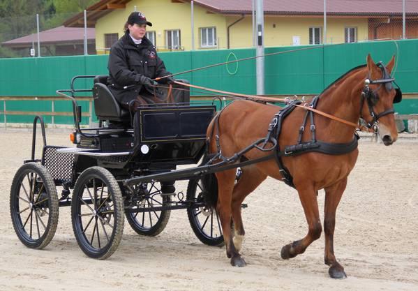 Kerstin Gerber aus Günsberg ist die Besitzerin von Freibergerstute Barbara