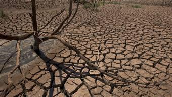 Der Weltklimarat erwartet längere und extremere Dürren (Symbolbild)