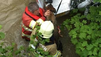 """Erst nach 45 Minuten gelingt es den Feuerwehrleuten, den """"völlig verängstigten Hund"""" aus dem Hubrettungsfahrzeug in Sicherheit zu bringen."""