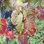 Herbst in der Klus in Aesch