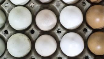 Neuer Eierrekord: 2019 dürften Hühner in Schweizer Ställen erstmals über eine Milliarde davon gelegt haben. (Themenbild)